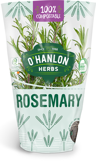 Rosemary care self watering
