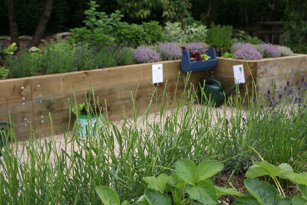 community Herbs garden